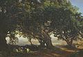 Landscape Yegor Meyer.jpg