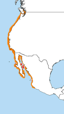 Range of L. heermanni