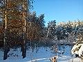 Las przy drodze - panoramio.jpg