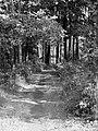 Leśna droga - panoramio (4).jpg