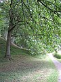 Leafy glade at The Weir Gardens - geograph.org.uk - 1421692.jpg