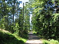 Leikkipuiston-takana-metsatie.jpg