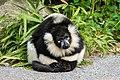 Lemur (27618528338).jpg