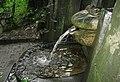 Lesní pramen žába - panoramio.jpg