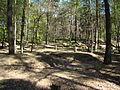 Lidzbark Warmiński - cmentarz z I wojny światowej.jpg