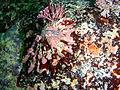 Limpet at Castle Rocks P7260931.JPG