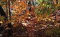 Lincoln NF Trail 2.jpg