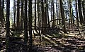 Lincoln National Forest 7 (2).jpg