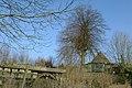Linde als schutsboom bij 't Karrewiel te Zwalm - 372635 - onroerenderfgoed.jpg