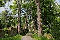 Lindenallee bei Schloss Engelstein 03 2015-05 NÖ-Naturdenkmal GD-113.jpg