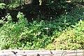 Little Yoho Valley IMG 4847.JPG