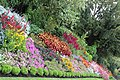 London, St. James's Park IMG 1877.JPG