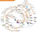 London Overground as a circle.pdf