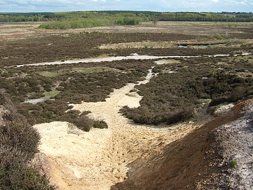 Looking down a sand hill on Roydon Common - geograph.org.uk - 1854997