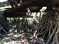 Lots of hardwood logs found inside ruins - panoramio.jpg