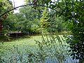Mörlbach, Dorfweiher.2.jpg
