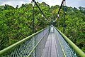 MacRitchie Nature Trail, Singapore; December 2014 (08).jpg
