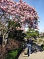 Magnolienblüte im Japanischen Garten im Freiburger Seepark mit Fotografin.jpg