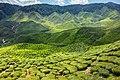 Malaysia - Cameron Highlands (25582401023).jpg