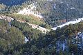 Maljen - Divčibare - zapadna Srbija - vrh Velika Pleća - detalj 1.jpg