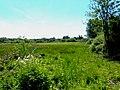 Marshland near Wareham - geograph.org.uk - 851950.jpg