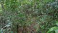Mauritian forest (8131976739).jpg