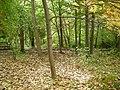 Meijer Gardens October 2014 23 (Woodland Shade Garden).jpg