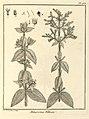 Melastoma villosa Aublet 1775 pl 168.jpg