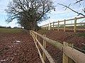 Mended fences - geograph.org.uk - 650416.jpg