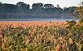 Mentor Marsh Nature Preserve (9594863501).jpg
