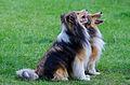 Miko & Luca (11707984104).jpg