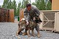 Military Working Dogs Are Vital Members of Manas K-9 Crew DVIDS172135.jpg