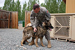 Military Working Dogs Are Vital Members of Manas K-9 Crew DVIDS172135.jpg