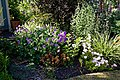 Mixed border in a cottage garden at Boreham, Essex, England 02.jpg