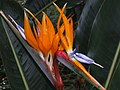 Monte Palace Tropical Garden DSCF0119 (4642262841).jpg