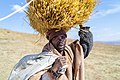Mosotho Shepherd Collecting Thatch Grass.jpg