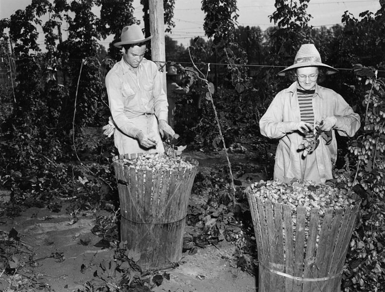 File:Mr. and Mrs H.L. Worley at the Mitoma Hop Yard (6427136287).jpg