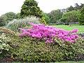 Muckross House, 9.5.14 - panoramio (5).jpg