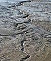 Mud, mud, glorious mud - geograph.org.uk - 1080041.jpg