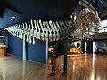 Museo Marítimo del Cantábrico (108).jpg