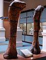 Museo de La Plata - Antarctosaurus wichmannianus (fémures).jpg