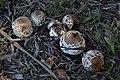 Mushrooms(2).jpg