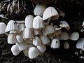 Mushrooms on the wood.jpg