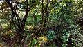 Mussoorie road41.jpg