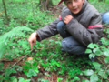 My friend, Dmitrii Matevosov, points at the Gyroporus Castaneus hidden in the grass.png