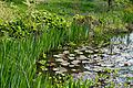 Myddelton House garden, Enfield, London ~ Lakeside at north.jpg