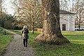NDOÖ 029 Wilhering Tulpenbaum Stamm Dezember 2013.jpg