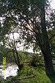 Nad jeziorem Miedwie - panoramio.jpg
