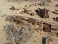 Namibia - P9133870 (15306862412).jpg