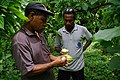 National Cocoa Advisor Dr John Konan and Ministry of Agriculture Cocoa research Officer Raymond Vava count cocoa beans in a pod. (10708738425).jpg